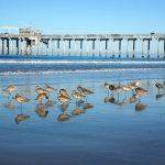 Scripps La Jolla Shores Piew