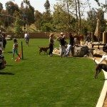 Black Mountain Ranch Dogs