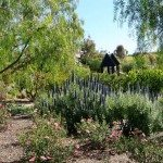 Santaluz Black Mountain Ranch San Diego9.jpg