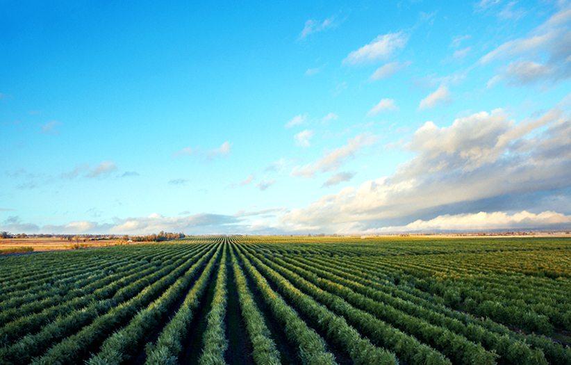 Artois in Glenn county California